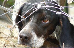 Calgary Humane Society rescata 40 animales victimas de maltrato