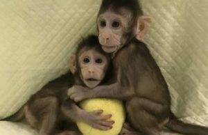 Científicos en China clonaron con éxito monos