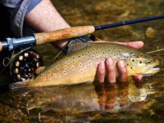 Gobierno de Alberta rechaza propuesta para cerrar populares ríos de pesca