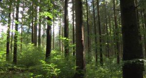 La mitad del bosque boreal de Alberta podría desaparecer debido a incendios y el cambio climático