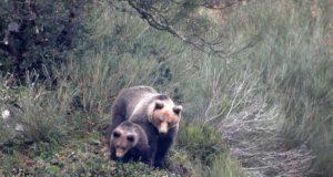 Cierran senderos del lago Minnewanka luego de que un oso atacara una tienda