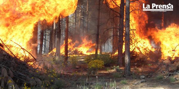 istema para predecir incendios forestales de Alberta