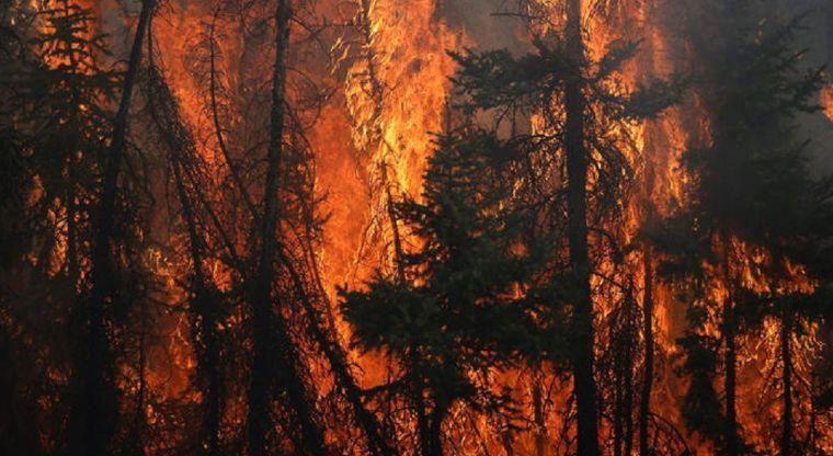Incendio forestal en Waterton