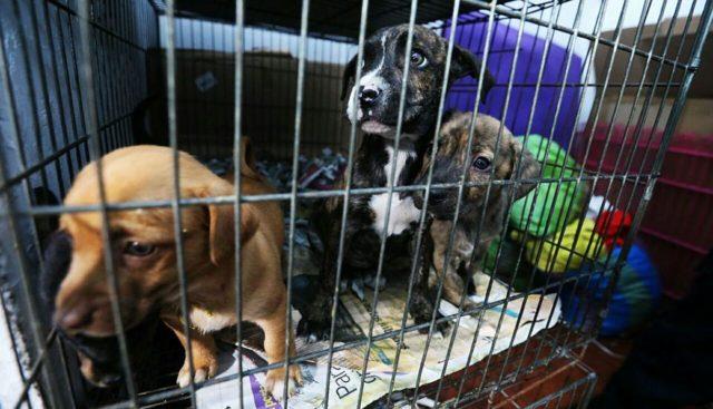 Animales abandonados en una tienda de mascotas fueros rescatados