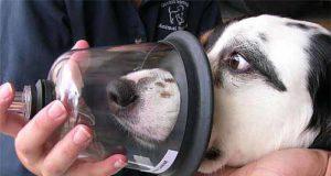 Bomberos de Montreal estrenan kits completos para reanimación de animales
