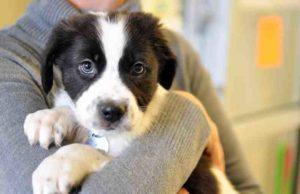 Propietario de tienda de mascotas de Edmonton enfrenta cargos por abandonar animales