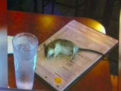 Increíble! Una mujer estaba cenando y una rata viva cayó sobre la mesa