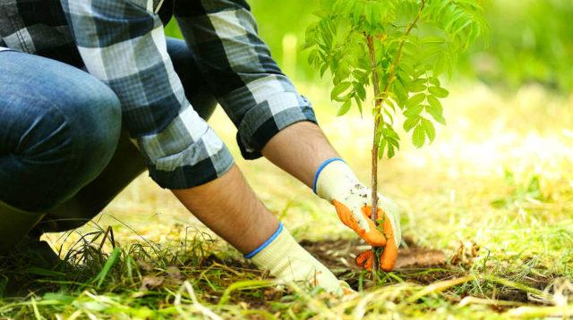 Ottawa se compromete a gastar $ 15 millones para salvar el programa de plantación de árboles de Ontario