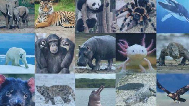 1 millón de especies están en peligro de extinción, según la ONU