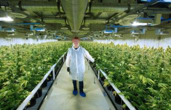 Cambios de impuestos provinciales para los productores de cannabis