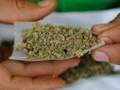 40% de los consumidores de marihuana en Canadá la adquieren ilegalmente
