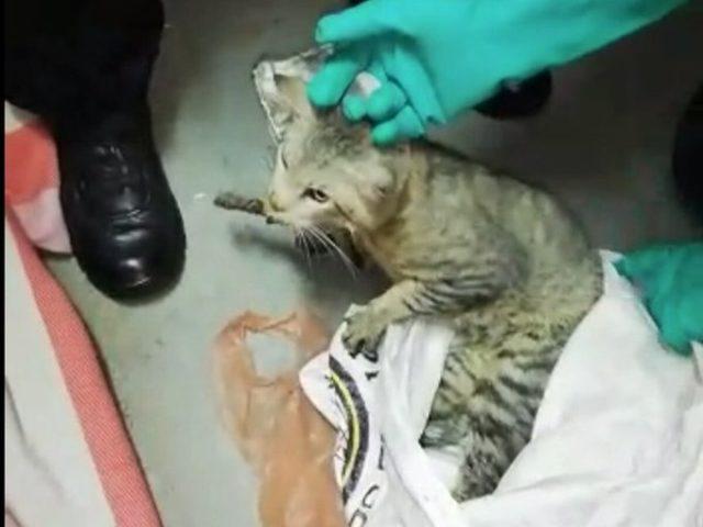 Gato es capturado ingresando celulares a prisión